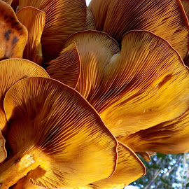 Mushrooms by Milos Milanovic - Nature Up Close Mushrooms & Fungi ( nature, autumn, mushrooms )