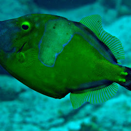 by Ron Solodiver - Animals Fish