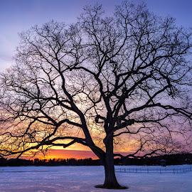 Happy Tree in Winter by Matt Reynolds - City,  Street & Park  City Parks