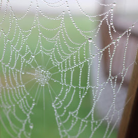 Just thought this was cool lookin by RichandCheryl Shaffer - Nature Up Close Webs