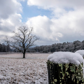 Cades Cove Posts and Tree by Stephanie Turner - Landscapes Prairies, Meadows & Fields ( nature, snow, nature photography, landscapes, fields )