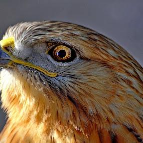 by Muhammad Amin Zia - Animals Birds
