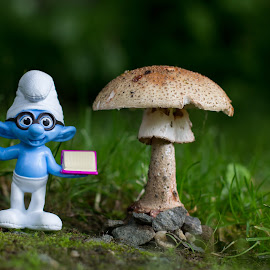 Nature studies by Kristy Lester - Artistic Objects Toys ( mushroom, nature, toy, smurf, mushrooms,  )