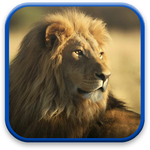 Lion Live Wallpaper