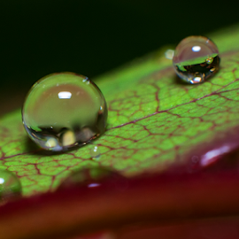 Water drop1 by Josip Ćutunić - Nature Up Close Water