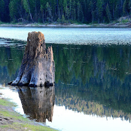 by Teresa Menard - Nature Up Close Trees & Bushes