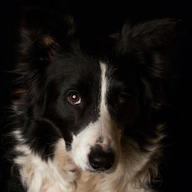 by Marjan Smit - Animals - Dogs Portraits