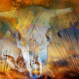 Texas Dreams by Scott Walker - Digital Art Abstract ( skull, dreams, color, texas, fusion )