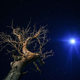 sycamore > a royal tree in Madagascar by Radonirina Ramiandrisoa - Nature Up Close Trees & Bushes ( moon, tree, stars, hitsorical, madagascar )