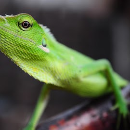 by Tian Yuana Bayu - Animals Reptiles