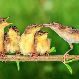 Feeding by MazLoy Husada - Animals Birds