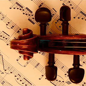 Violin B by Richard Timothy Pyo - Artistic Objects Musical Instruments ( object, musical, instrument )