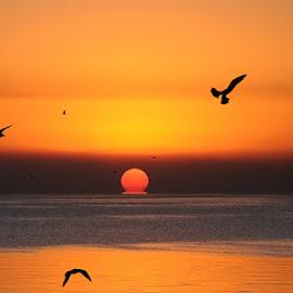 sunrise at the river by Edith Polverini - Landscapes Sunsets & Sunrises ( sea, melting sun, sunrise, birds, river, red sun )