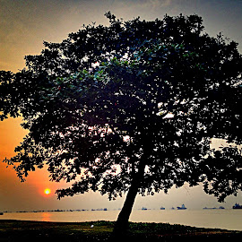 Tree and Sunrise by Janette Ho - Instagram & Mobile iPhone (  )