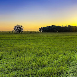 sunset field by Cornelius D - Landscapes Prairies, Meadows & Fields