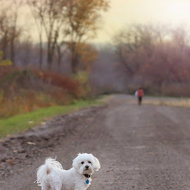 This one makes me laugh. If you look in the background you will see the little man in the background running down the road. He wanted to let his energy out. The dog stopped and looked at his parents like  by Jennifer VanValkenburg Bellino - Animals - Dogs Portraits