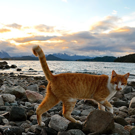 Stray cat following me at the beach by Tyrell Heaton - Animals - Cats Portraits