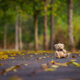 lonely teddy by Sivani Siva - Artistic Objects Toys ( bear, toy, nature, leafs, trees, fun, road, teddy )