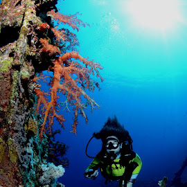 by Damir Zurub - Landscapes Underwater ( red sea, corals, redsea, diving, egypt )