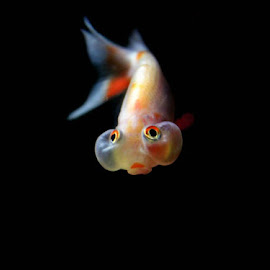 by Arunima Malik - Animals Fish