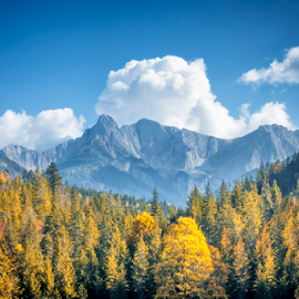 autumn alps by Markus Gann - Landscapes Mountains & Hills ( countryside, plant, europe, mountain, colorful, leaf, travel, yellow, beauty, landscape, hiking, panorama, swiss, sky, tree, nature, fresh, autumn, light, alps, orange, majestic, beautiful, white, indian, forest, scenic, country, european, vacation, environment, red, season, blue, color, fall, background, summer, cloud, scene, natural, culture, bavarian )
