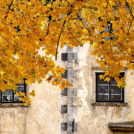 by Silva Predalič - Buildings & Architecture Architectural Detail ( nature, autumn, color, colorful, fall, castle, windows, monument, yellow, leaves )
