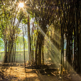 Angel Rays by Shivaang Sharma - City,  Street & Park  City Parks ( nature, park, tree, street, beauty, landscape, rays )