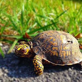 Slowpoke by Katrina Rose - Instagram & Mobile iPhone ( slow animal, iphone, turtle, animal )