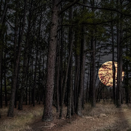 Moonrise Forest  by Paul Haines - Landscapes Forests (  )