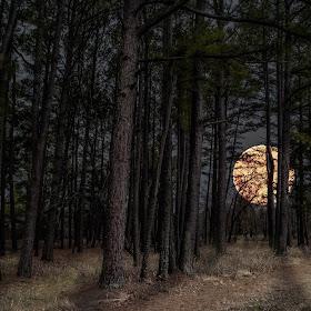 Moon Seq State park .jpg