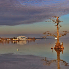 Gulf Coast by Zeralda La Grange - Landscapes Travel ( #louisiana, #lake, #coast, #tree, #water,  )