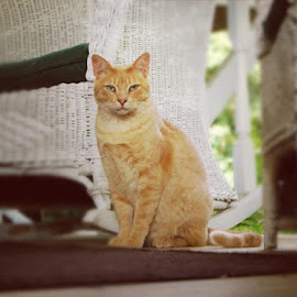 Tom Cat by Rebecca Bradford - Novices Only Pets (  )