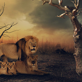 Lion family by Indra Aryadi - Digital Art Animals