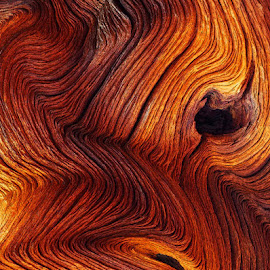 Bristle Cone Pine by Mike Moats - Nature Up Close Trees & Bushes