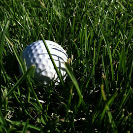 by Robert Fox - Sports & Fitness Golf ( golf, links )
