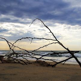 Tangled by Abhinav Goel - Landscapes Beaches ( clouds, sand, sunset, sea, india, beach, chennai )