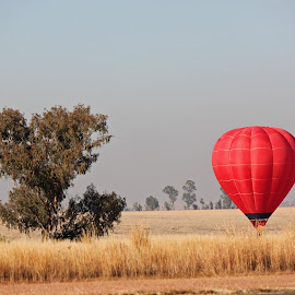The Landing by Dirk Luus - Transportation Other ( landing, fly, hot, air, balloon )