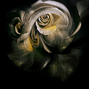 FLOWER'S STORM by Carmen Velcic - Digital Art Abstract ( abstract, roses, flowers, storm, digital )
