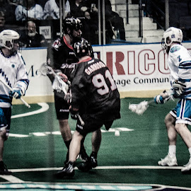 Fighting by Enrique Santana Carballo - Sports & Fitness Lacrosse ( sports, game, vancouver, lacrosse, rochester )