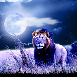 Contemplative Lion by Charlie Alolkoy - Illustration Animals ( savannah, lion, moon, sky, grass, night, africa )
