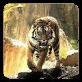 Tigers Live Wallpaper APK for Bluestacks
