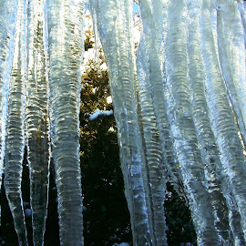 Icycles Outside the Window by Kathy Rose Willis - Nature Up Close Water ( water, illinois, sparkly, cold, bluish, icicles, frozen,  )