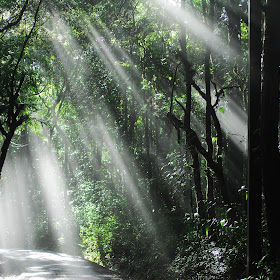 Sunlight in the woods.jpg