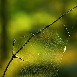 Hämähäkinseitti by Niina Hakkarainen - Nature Up Close Webs