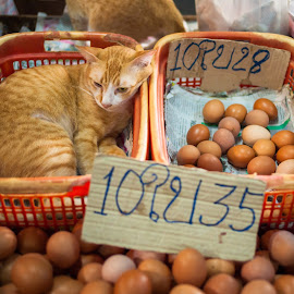 Cat of Guardian by Loke Inkid - City,  Street & Park  Markets & Shops ( cat, market, thailand, maeklong, egg,  )