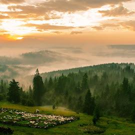 Bucovina by Florin  Galan - Landscapes Travel ( clouds, ships, forest, sunrise, bucovina, landscape, montain,  )