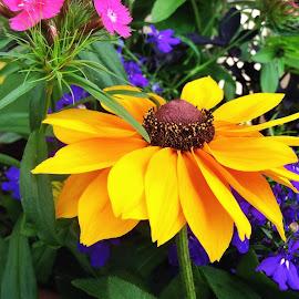 by Svea Neitzke - Novices Only Flowers & Plants