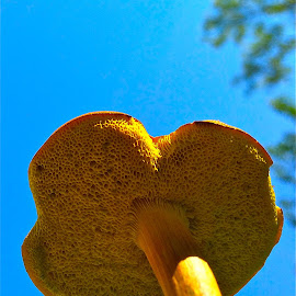 Mushroom with iPhone by Tyrell Heaton - Nature Up Close Mushrooms & Fungi ( mushroom, iphone )