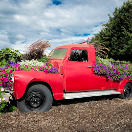 Red truck by Chris Bartell - Transportation Automobiles ( old, red, truck, flowers )