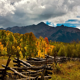 by David Short - Landscapes Forests ( color, fall, colorado, david lee short, last dollar road )